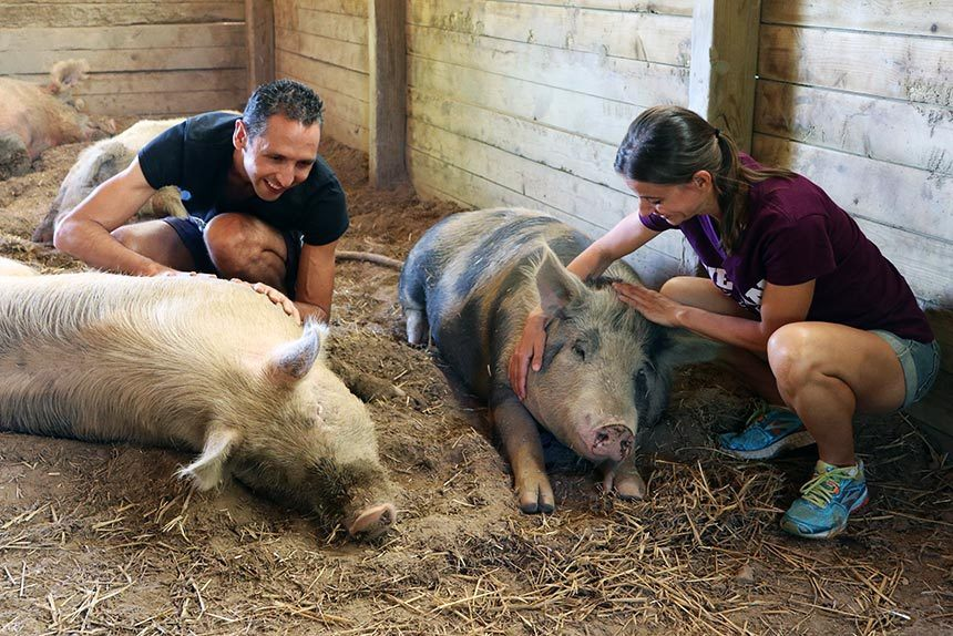 Natasha and Luca of That Vegan Couple next to two pigs who they are petting