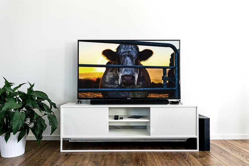 living room with white sideboard and a tv on which is the image of the cow from the documentary cowspirary