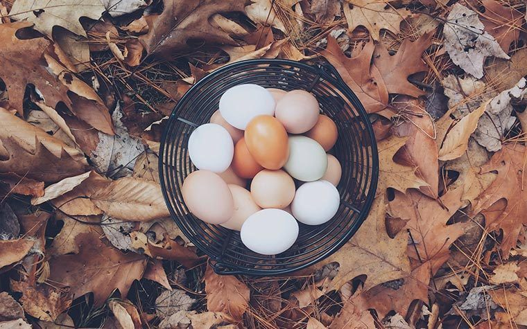 eggs in nature