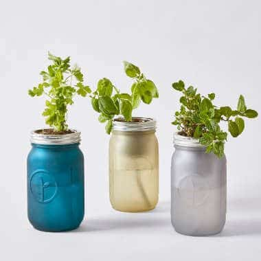 three colorful mason jars with herbs coming out on top next to each other